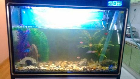 杀菌灯在鱼类养殖中的运用